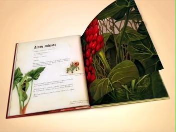 herbario de hadas 3